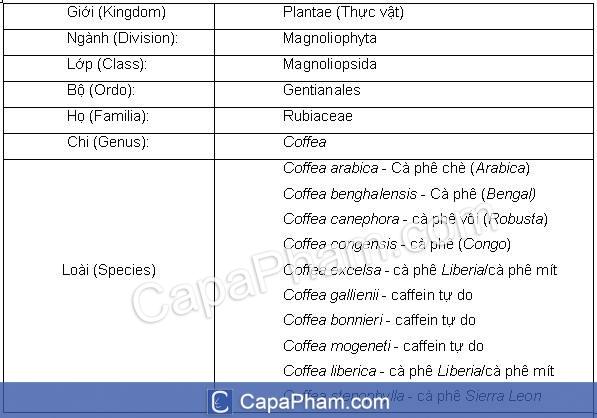 Đặc tính thực vậtcây cà phê